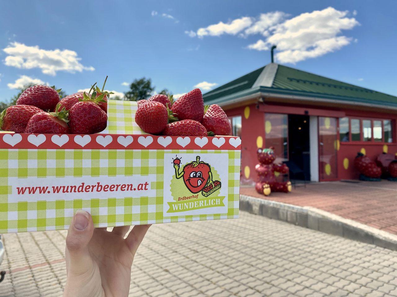 Erdbeerhof Wunderlich - Erdbeer Drive-in - B4 Stockerau