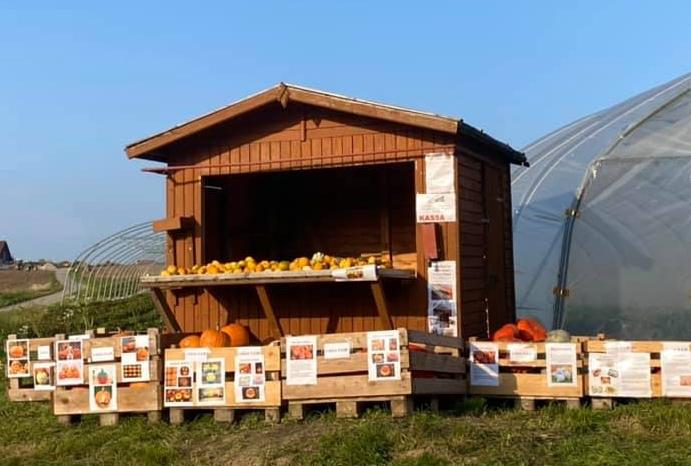Erdbeerhof Wunderlich - Verkaufsstand mit Kürbissen